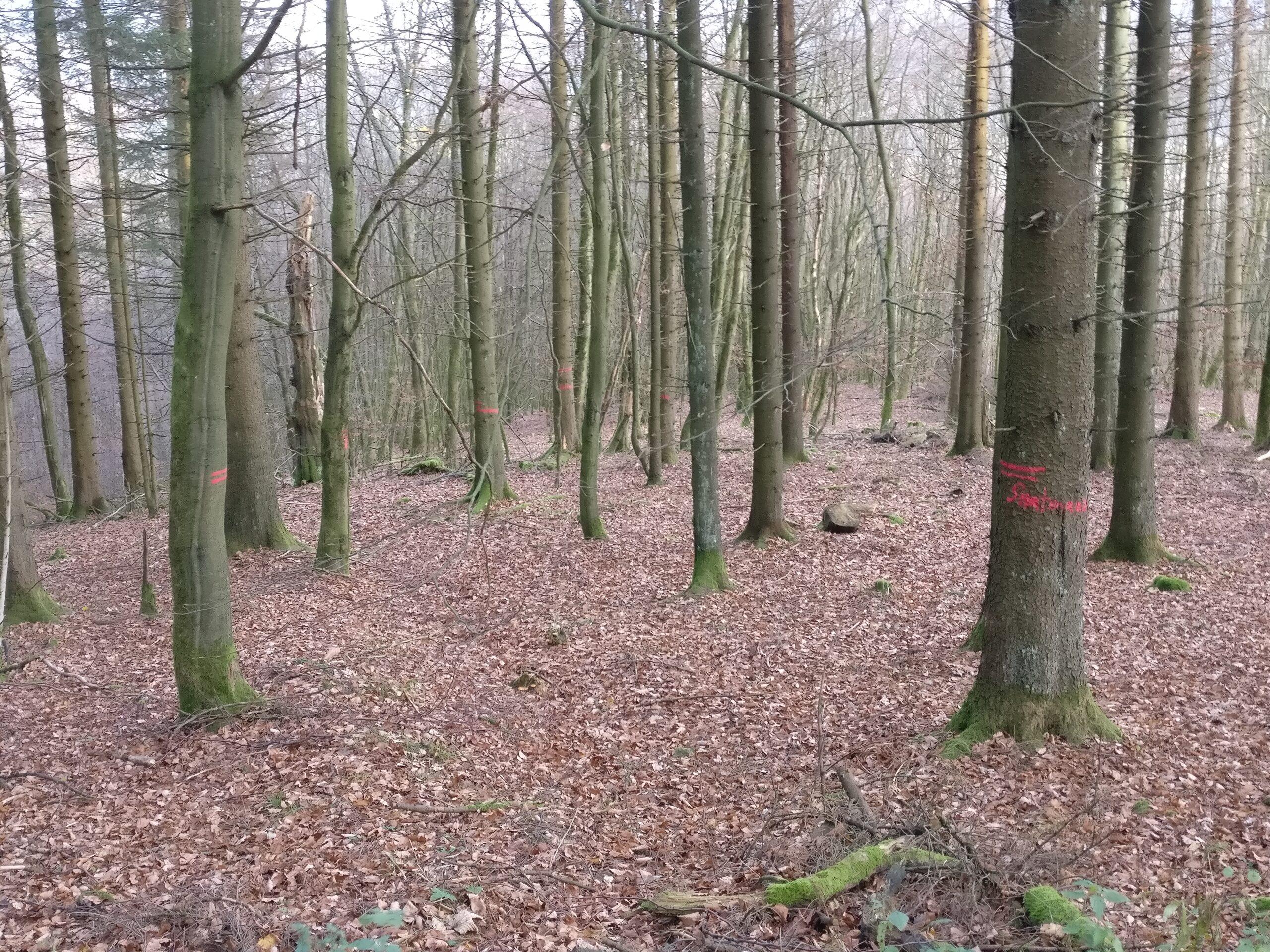 Baummarkierungen Rückegassenmarkierung