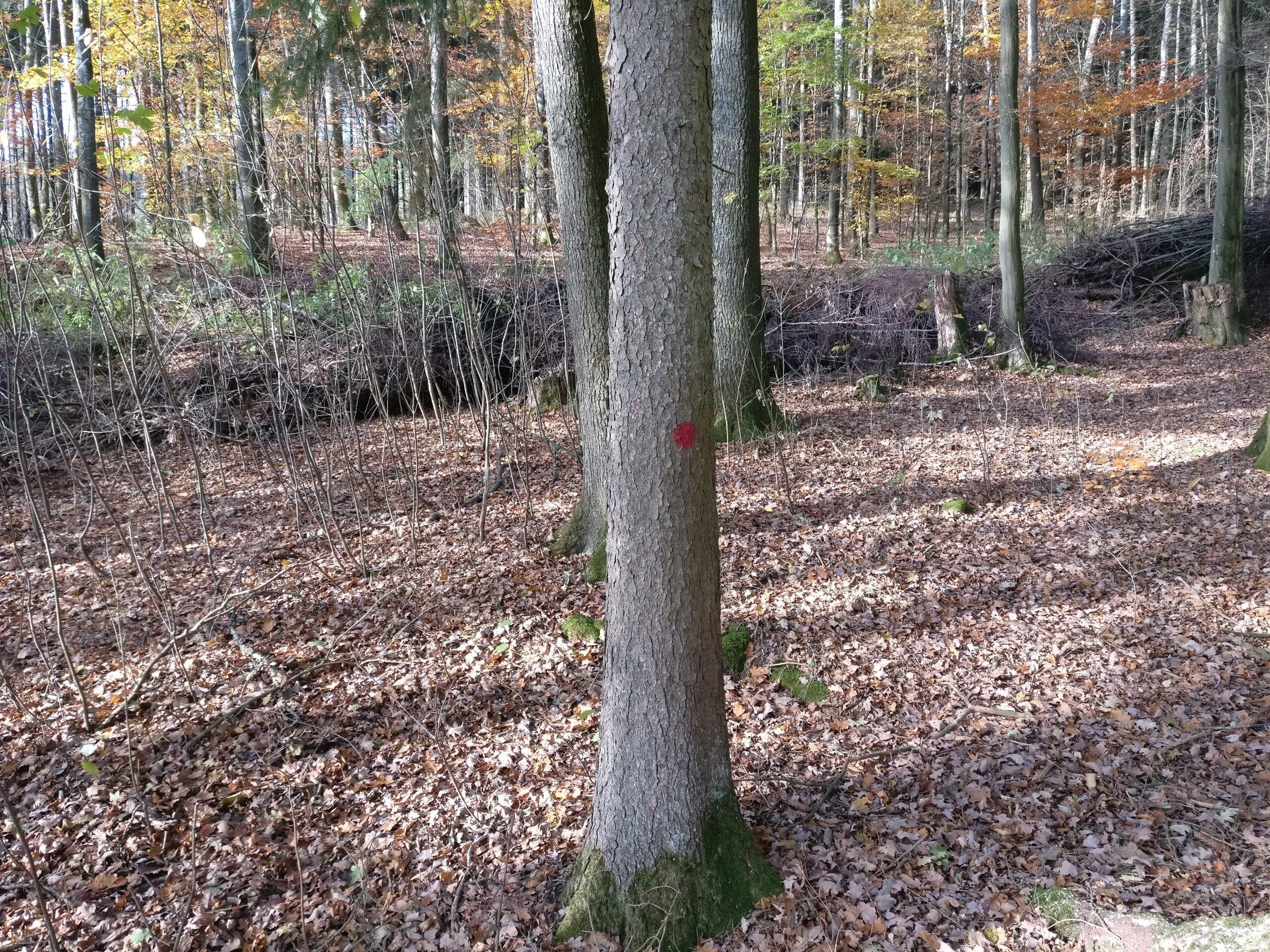 Baummarkierung Zukunftsbaum mit Punkt