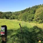 Wanderung auf der WällerTour Brexbachschluchtweg im Westerwald